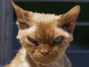 mad+cat