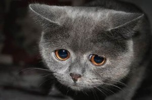 Sad_Cat_main-425x283